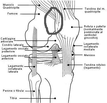 Fastidio al ginocchio Ginocc10