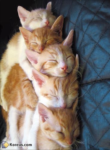 Le jeu des chats 4image10