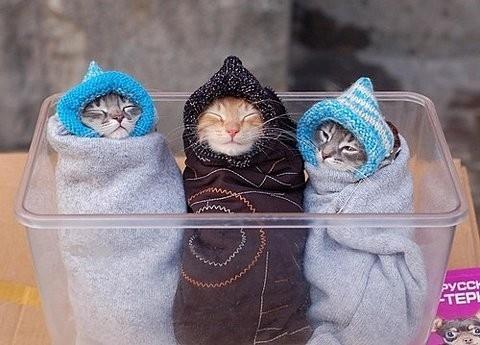 Le jeu des chats Chat-h10