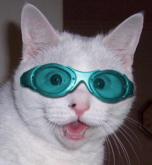 Le jeu des chats Chat-l10