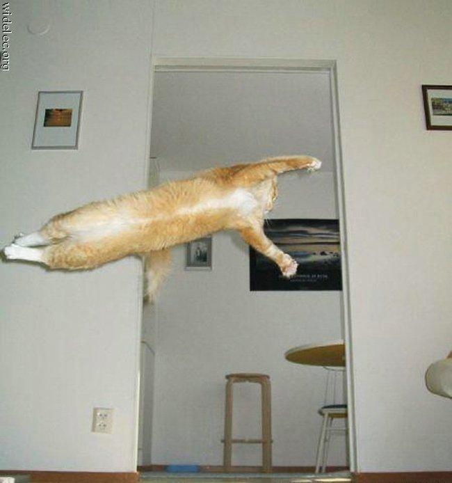 Le jeu des chats Chat-v10