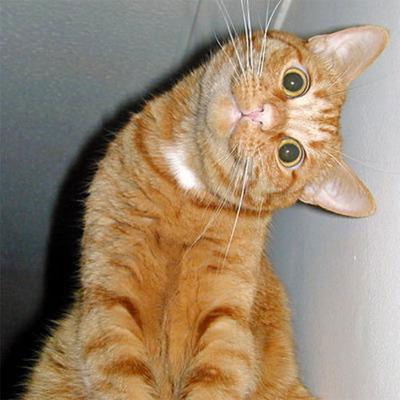 Le jeu des chats Chat3510