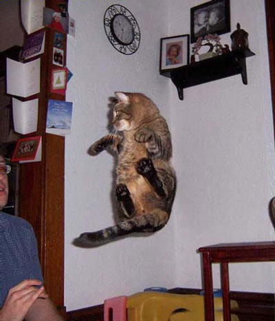 Le jeu des chats Levita10