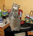 Le jeu des chats Paf-le11
