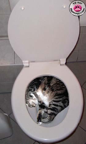 Le jeu des chats Wc_cha12