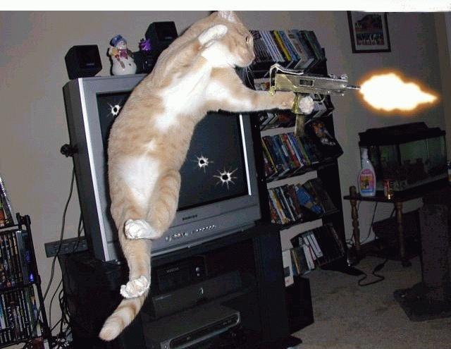 Le jeu des chats Xhuf1p11