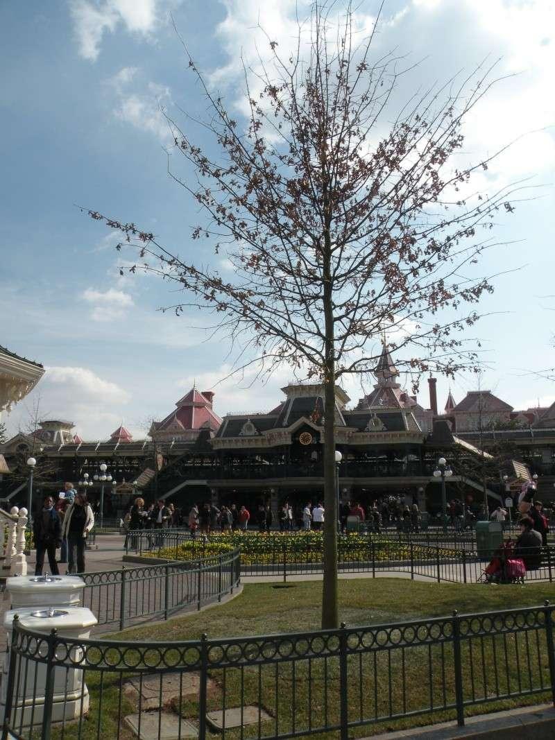 Remplacement des arbres à Disneyland Paris - Page 3 00111