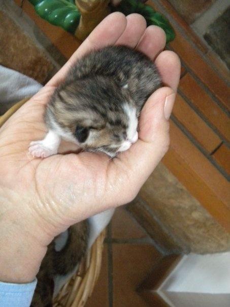 Chaton mâle à adopter Chaton10