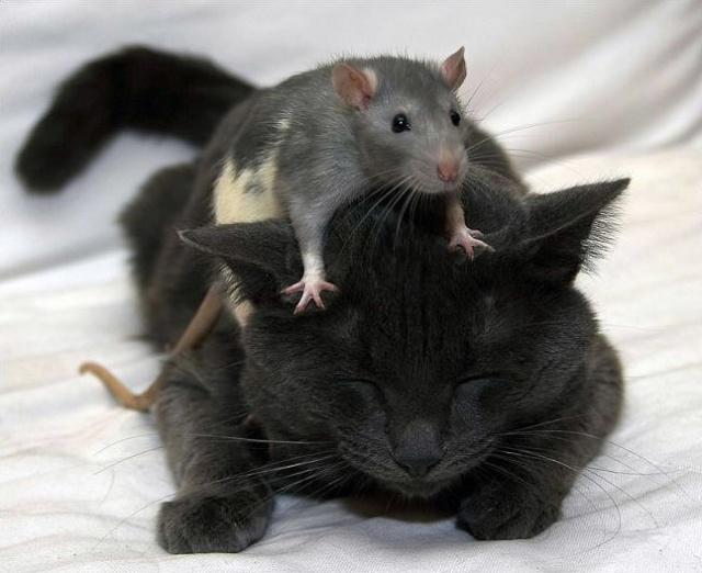 CAT-tastrophes! 944_1010