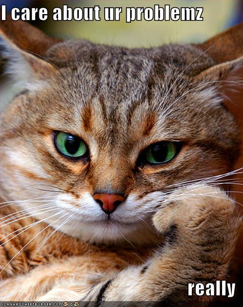 CAT-tastrophes! Funny-11