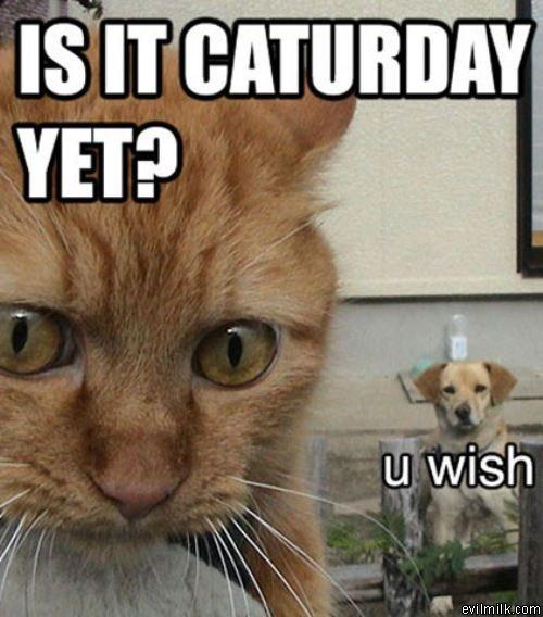 CAT-tastrophes! Is_it_10