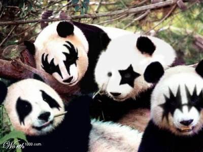 Panda plaza Panda-10