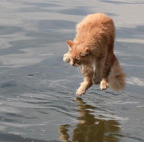 CAT-tastrophes! Right_10