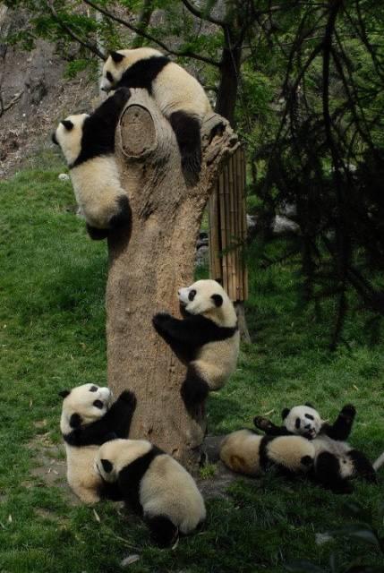 Panda plaza Att28210
