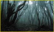 Forêts Sombres