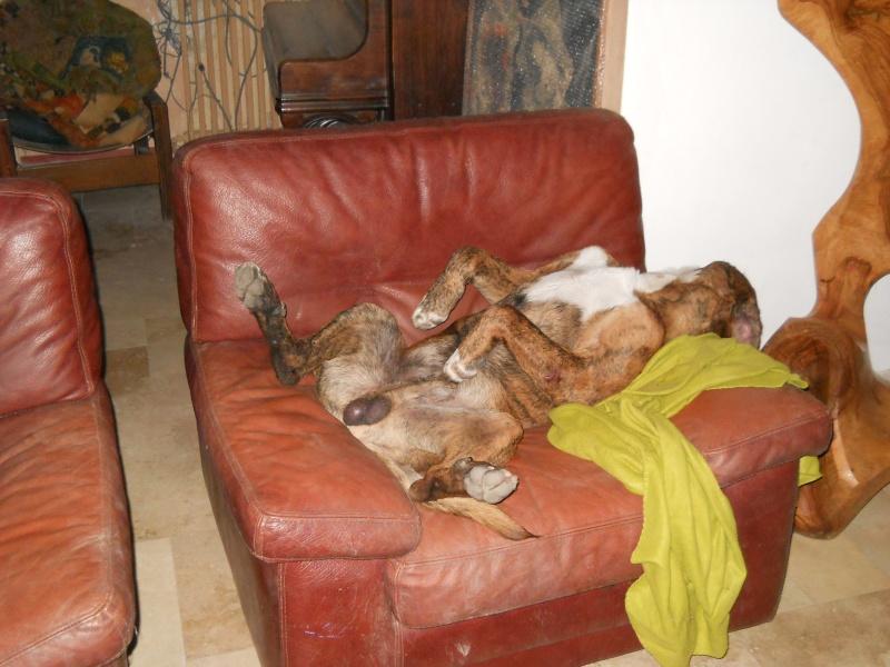 1 Cane corso + 1 Husky Dscn2022