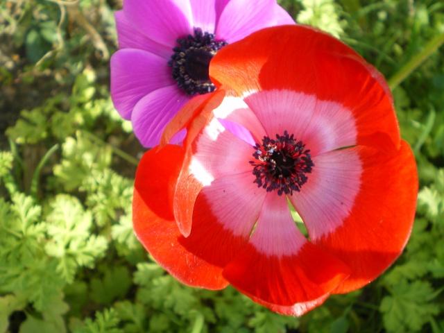 floraisons macro 13_mar19