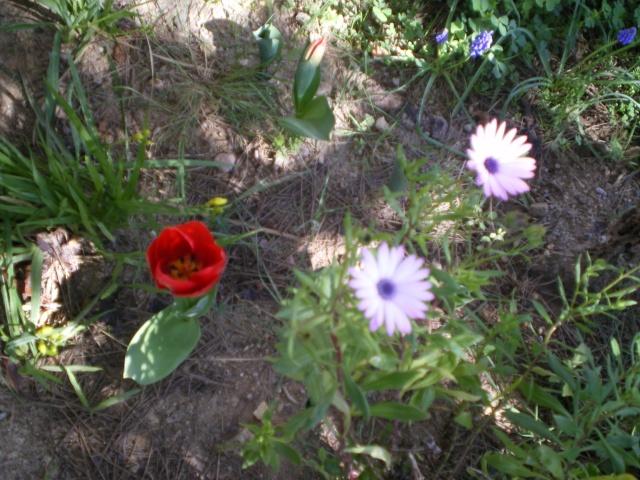 Floraisons de Mars - Page 3 Le_10_14