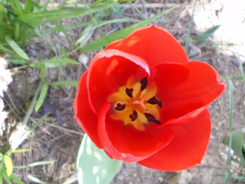 floraisons macro Le_10_22