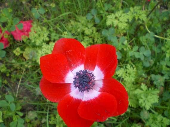 floraisons macro - Page 2 Le_21_17