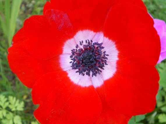 floraisons macro - Page 2 Le_21_18