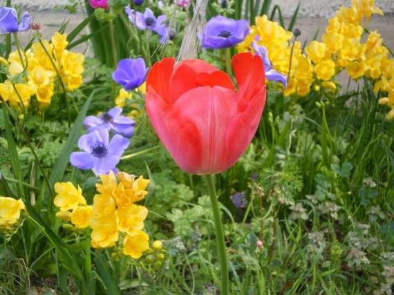 floraisons macro - Page 2 Le_21_19