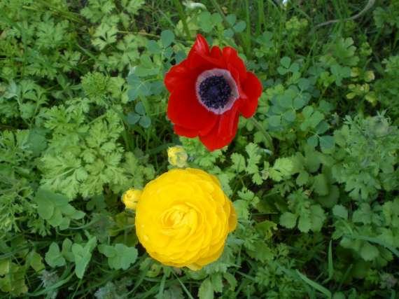 floraisons macro - Page 2 Le_21_22