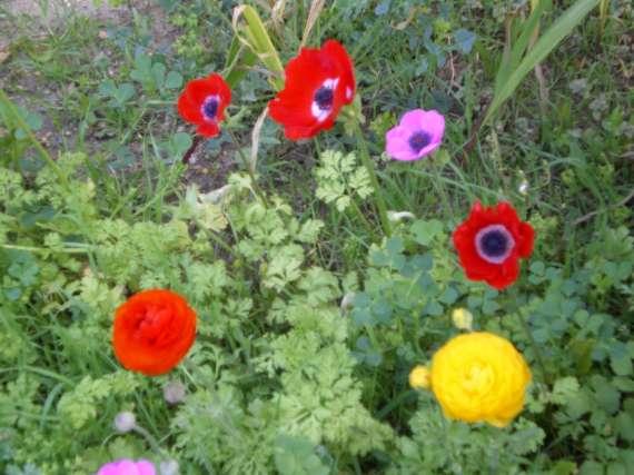 floraisons macro - Page 2 Le_21_23