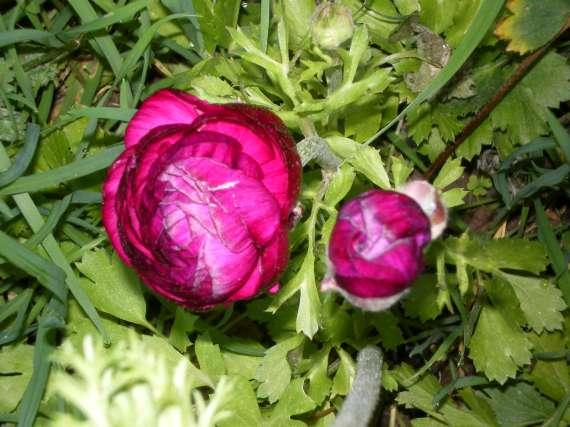 floraisons macro - Page 2 Le_21_24