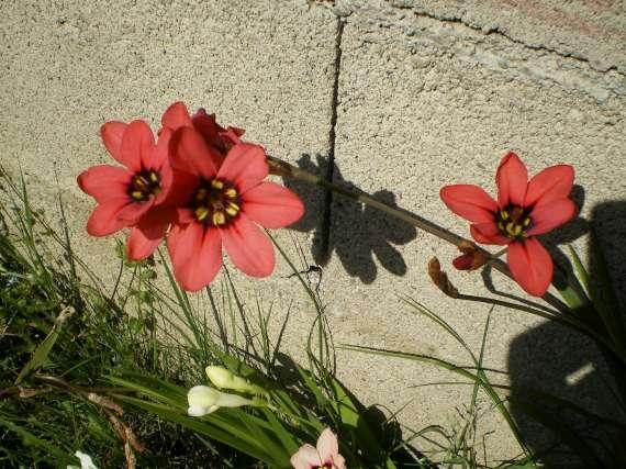 floraisons macro - Page 2 Le_23_11