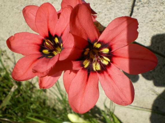 floraisons macro - Page 2 Le_23_12