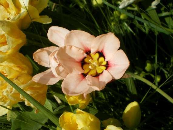 floraisons macro - Page 2 Le_23_13