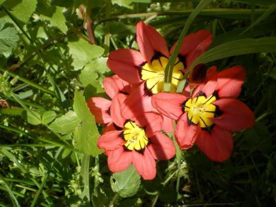 floraisons macro - Page 2 Le_23_14