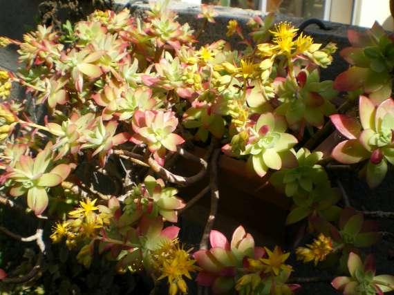floraisons macro - Page 2 Le_23_15