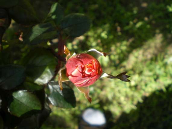 floraisons macro - Page 2 Le_23_16