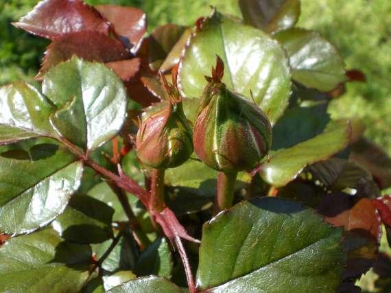 floraisons macro - Page 2 Le_23_17