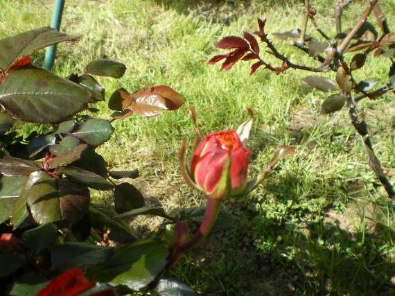 floraisons macro - Page 2 Le_23_19