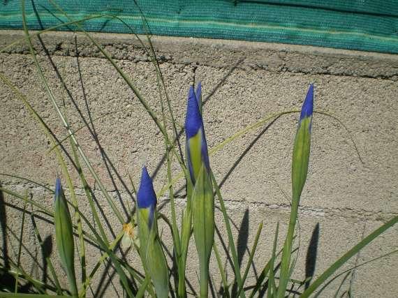 floraisons macro - Page 2 Le_24_12