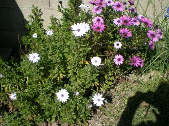 floraisons macro - Page 2 Le_24_17