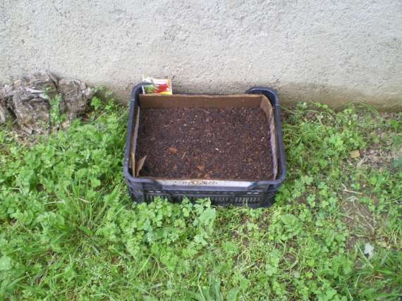 J'ai planté.....dans mon potager Le_3_a18