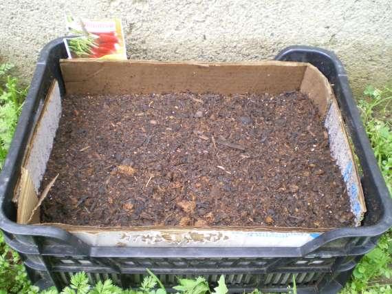J'ai planté.....dans mon potager Le_3_a19