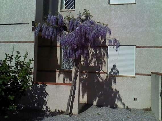 Floraisons du mois d'avril Le_6_a10