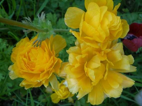 Floraisons du mois d'avril Le_6_a25