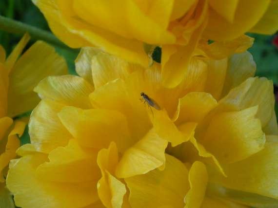 Floraisons du mois d'avril Le_6_a26