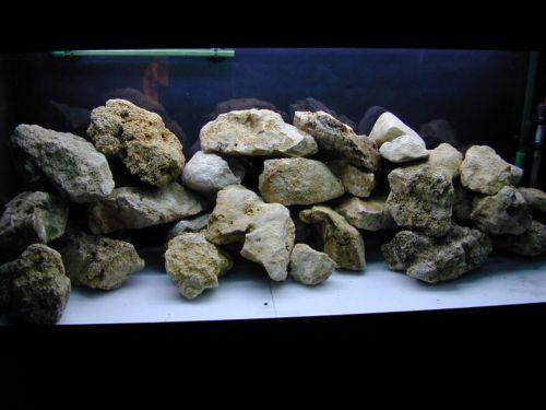 Aquarium Malawi Dscn0710