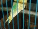 est- ce des ailes coupées ? Dscn1617