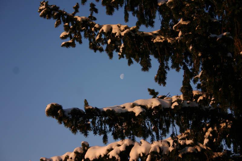 Lune dans les sapins enneigés Img_1211