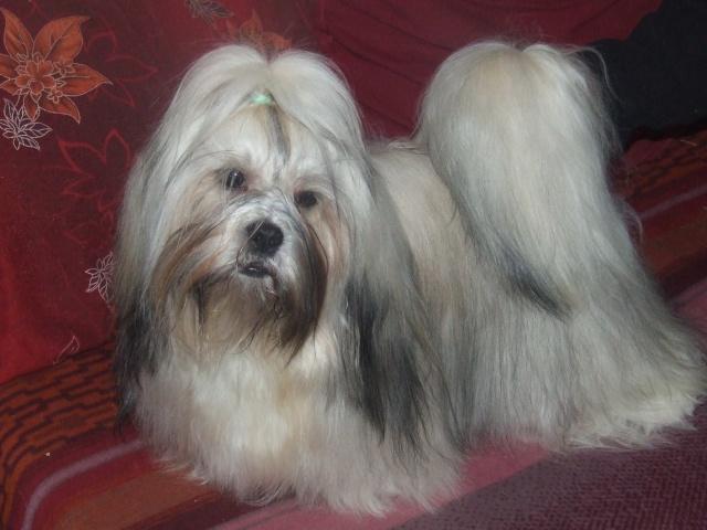 mes chiens Dscf5727
