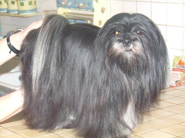 mes chiens Dscf5815