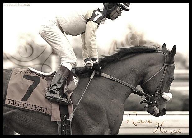 # Race Horse Tale_o10